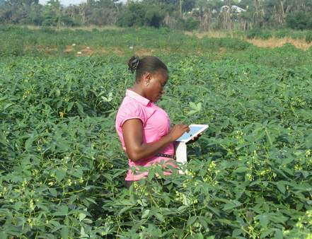 Electronic data collection for cassava breeding at Nigeria's National Root Crops Research Institute. GCP is promoting the use of digital tablets for data collection. See story: http://bit.ly/1fpeJON