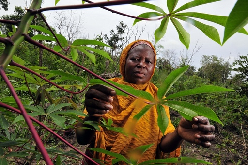 A cassava farmer in Northern Ghana.