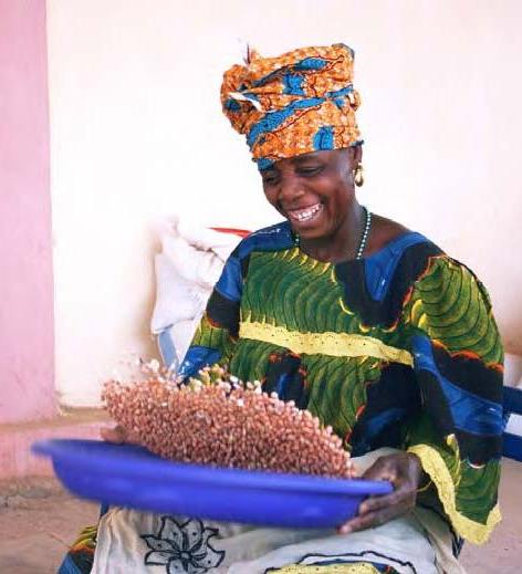 In Africa, groundnuts are typically cultivated in moderate rainfall areas across the continent, usually by women.