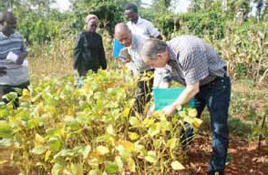 Jeff (foreground) inspecting soya bean trials in Kakamega, Kenya.