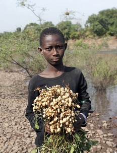 Youngster bearing fresh groundnuts along River Gambia in Senegal.
