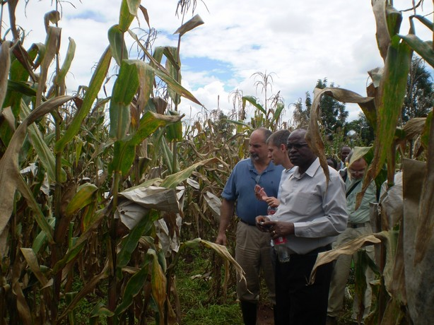 In the foreground, left to right, Leon, Jura and Sam in a maize field in Kenya.