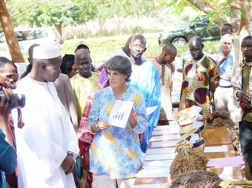 Eva Weltzien (holding sheet of paper) presenting to Mali's Minister of Agriculture (in white cap) a graph on the superiority of new guinea race hybrids. Also on display are panicles and seed of the huybrids and released varieties of sorghum in Mali. The occasion was an annual field day at ICRISAT's research station at Samanko, Mali.