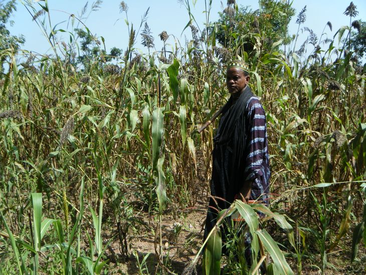 A sorghum farmer in Mali.
