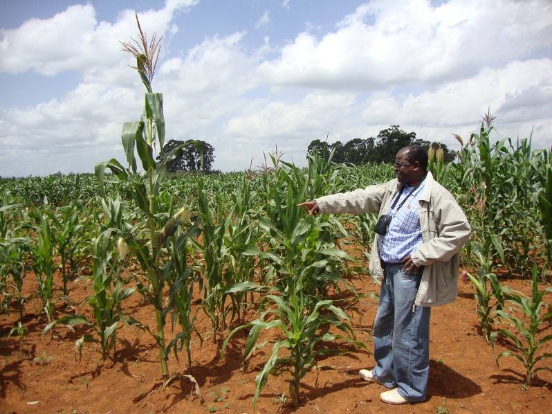 Sam in a maize field in Kenya.