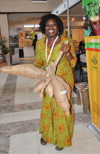 Cassava's no waif – luckily, as its tuberous roots are packed with staple carbohydrates. Here Ghanaian researcher Elizabeth Parkes shows off some huge and healthy cassava.