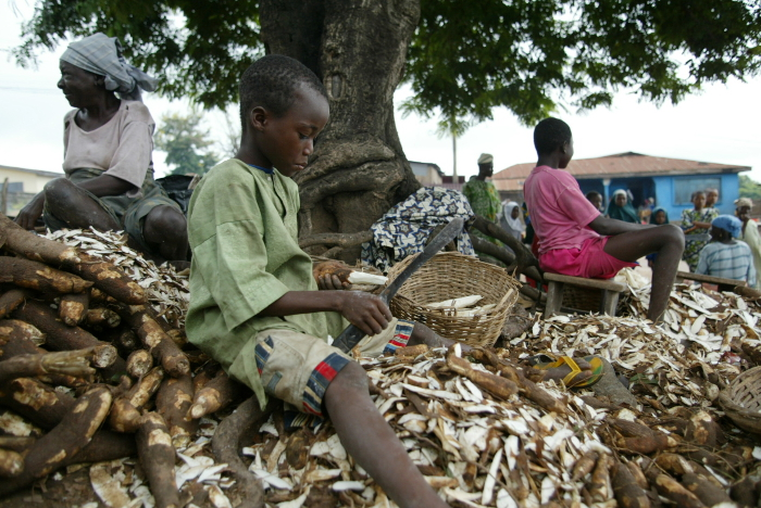 Hard at work, a boy helps to peel a mountain of cassava in Nigeria.