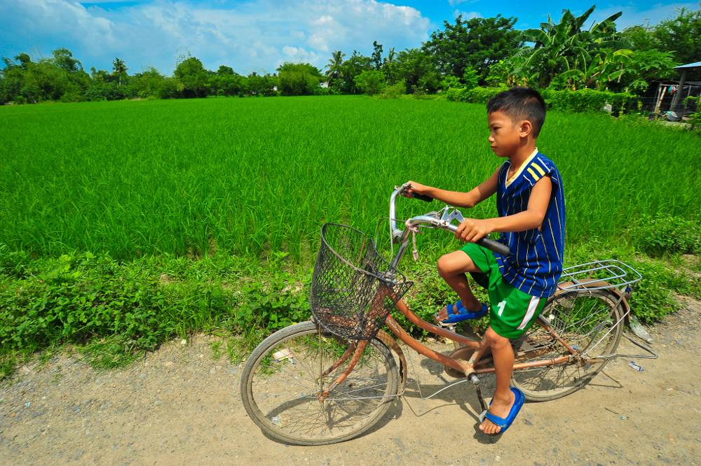 A boy rides his bicycle next to a rice field in the Philippines. With acid soils affecting half the world's arable fields, acid-beating crop varieties will help farmers feed their families – and the world – into the future.