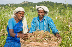 Women farmers in India bring home their sorghum harvest.