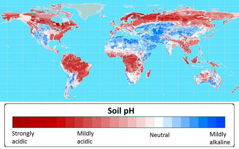 More than half of the world's potential crop-growing land is highly acidic. Map courtesy of Leon Kochian.