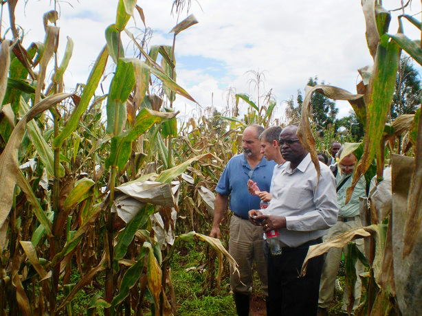 Left to right (foreground): Leon Kochian, Jurandir Magalhães (both EMBRAPA) and Sam Gudu (Moi University) examine crosses between Kenyan and Brazilian maize, at the Kenya Agricultural Research Institute (KARI), Kitale, in May 2010.